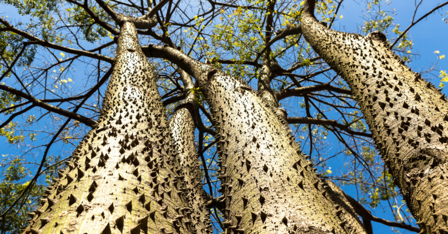 Tree Appreciation: Exploding Fruit Trees and Other Arboreal Creations